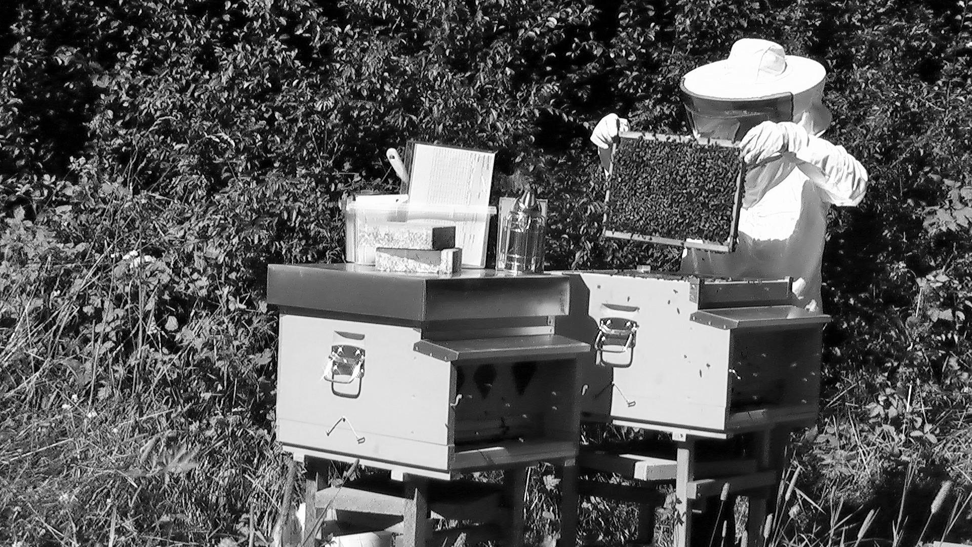 apiculteur neuchâtel